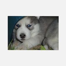 blue eyes (10) Magnets
