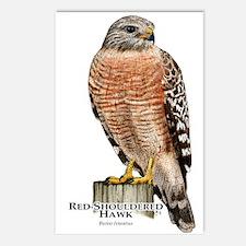 Red-Shouldered Hawk Postcards (Package of 8)