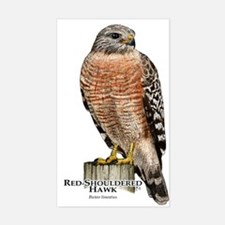 Red-Shouldered Hawk Sticker (Rectangle)