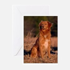 Sitting Toller Greeting Cards