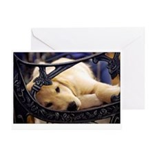 Sleeping Golden Puppy Greeting Cards