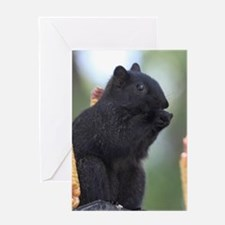 Black squirrel Greeting Cards