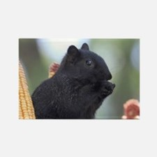 Black squirrel Magnets