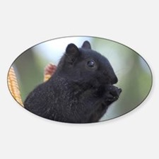 Black squirrel Decal