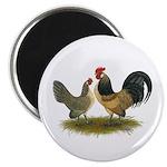 Dutch Blue Quail Chickens Magnet