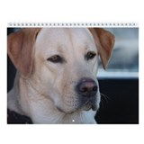 Labrador retriever Calendars