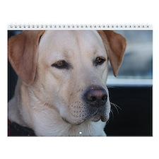JL 2nd Edition Special Labrador Wall Calendar A