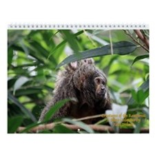 Creatures Of The Rainforest- Wall Calendar