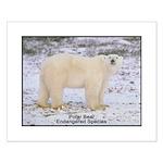 Polar Bear Photo Small Poster