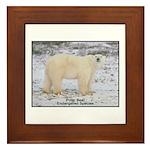 Polar Bear Photo Framed Tile