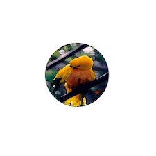 Golden Conure Mini Button