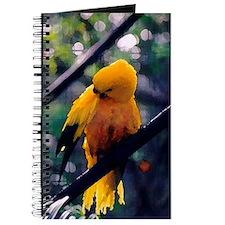 Golden Conure Journal