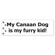 Canaan Dog Furry Kid Bumper Bumper Sticker