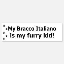 Bracco Italiano Furry Kid Bumper Bumper Bumper Sticker