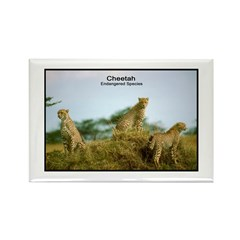 Cheetah Wildcat Photo Rectangle Magnet (10 pack)