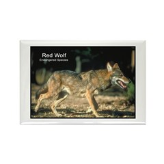 Red Wolf Photo Rectangle Magnet