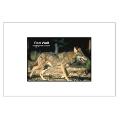 Red Wolf Photo Posters