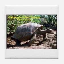 Galapagos Giant Tortoise Photo Tile Coaster