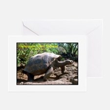 Galapagos Giant Tortoise Photo Greeting Cards (Pac