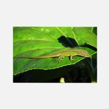Green Anole on Leaf Horizontal Magnet