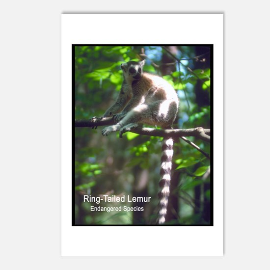 Ring-Tailed Lemur Photo Postcards (Package of 8)