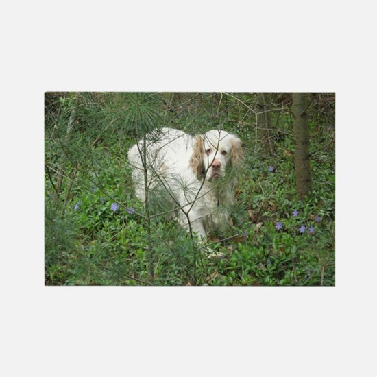 Clumber Spaniel Rectangle Magnet (10 pack)