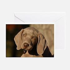 Weimaraner Puppy Portrait Greeting Cards