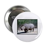 White Rhino Rhinoceros Photo 2.25