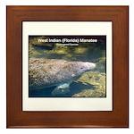Florida Manatee Photo Framed Tile