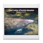 Florida Manatee Photo Tile Coaster