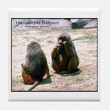 Hamadryas Baboon Photo Tile Coaster