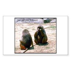 Hamadryas Baboon Photo Rectangle Decal