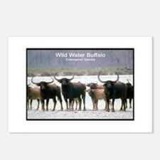 Wild Water Buffalo Photo Postcards (Package of 8)