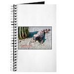 Gila Monster Lizard Photo Journal