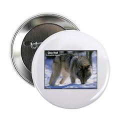 Gray Wolf Predator Photo 2.25