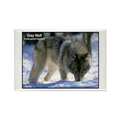 Gray Wolf Predator Photo Rectangle Magnet