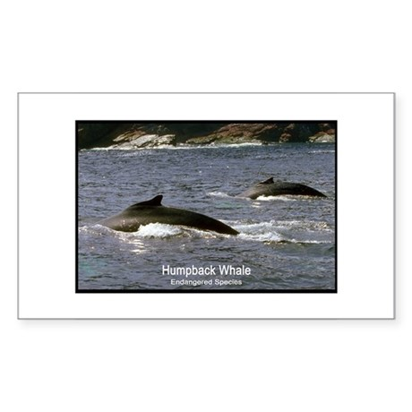 Humpback Whale Photo Rectangle Sticker