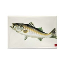 Striped Bass Gyotaku Rectangle Magnet