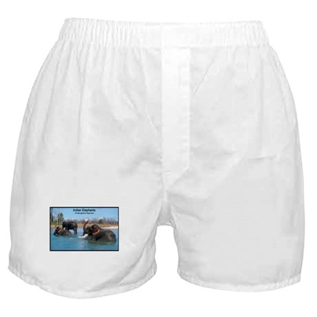 Indian Elephants Photo Boxer Shorts