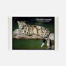Clouded Leopard Photo Rectangle Magnet