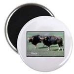 Gaur Bulls Photo Magnet