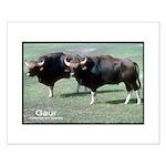 Gaur Bulls Photo Small Poster