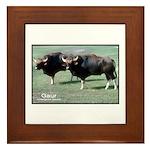 Gaur Bulls Photo Framed Tile