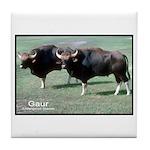 Gaur Bulls Photo Tile Coaster