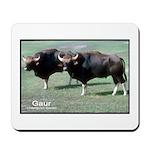 Gaur Bulls Photo Mousepad