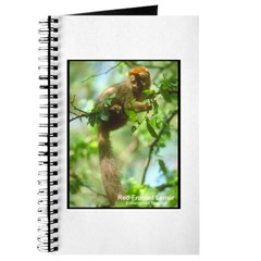 Red-Fronted Lemur Photo Journal