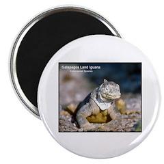 Gulapagos Land Iguana Photo Magnet