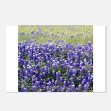 Texas Field of Blue Postcards (Package of 8)