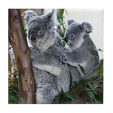 Tile Coaster-Koalas