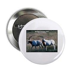 Scimitar Horned Oryx Photo 2.25